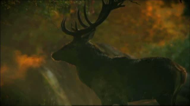 Mythos Wald Video 3
