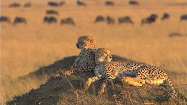 Serengeti Video 4