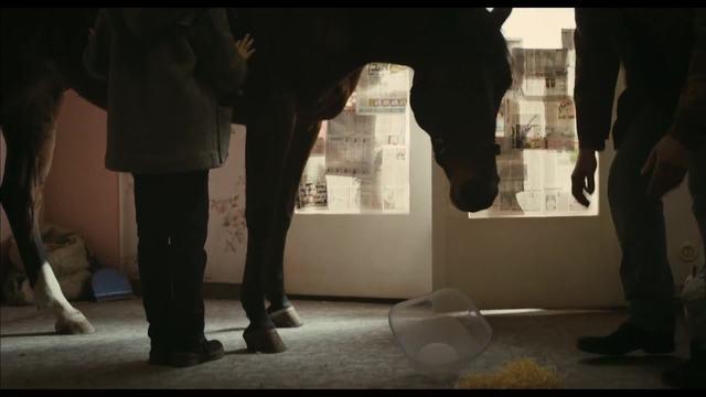 Das Pferd auf dem Balkon Video 3