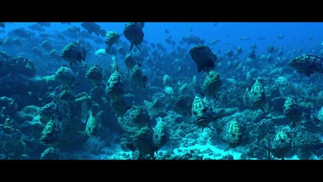 Unser Blauer Planet II Video 3