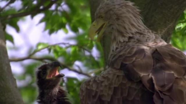 Die Welt der Adler Video 3